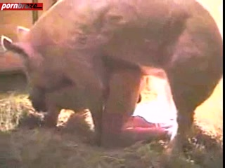 Girl sex with pig video tube